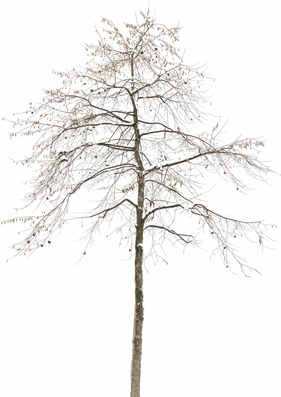NBF_Tree_Specimen_E5